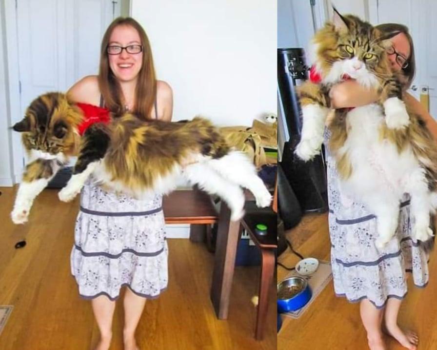 gatto-maine-coon-in-braccio