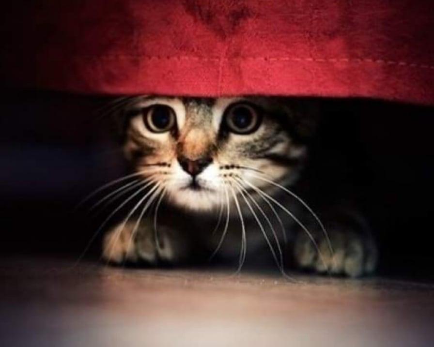 gatto-scappa-a-nascondersi