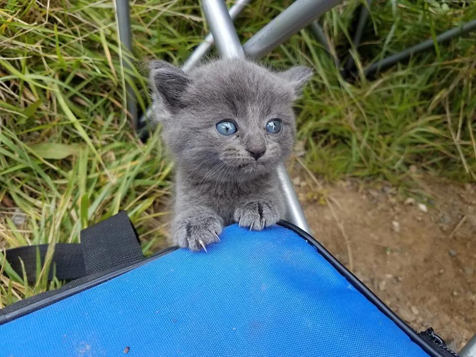 gattino-sbuca