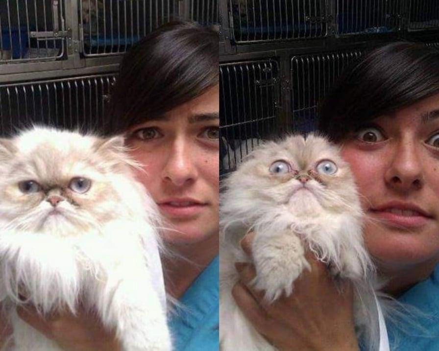 gatto-si-spaventa