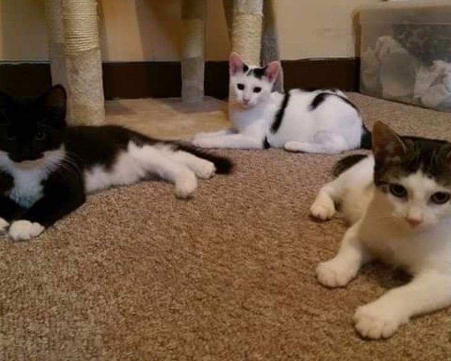 gatti-nella-stanza-da-gioco