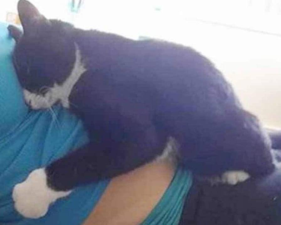 gatto-abbraccia-pancione