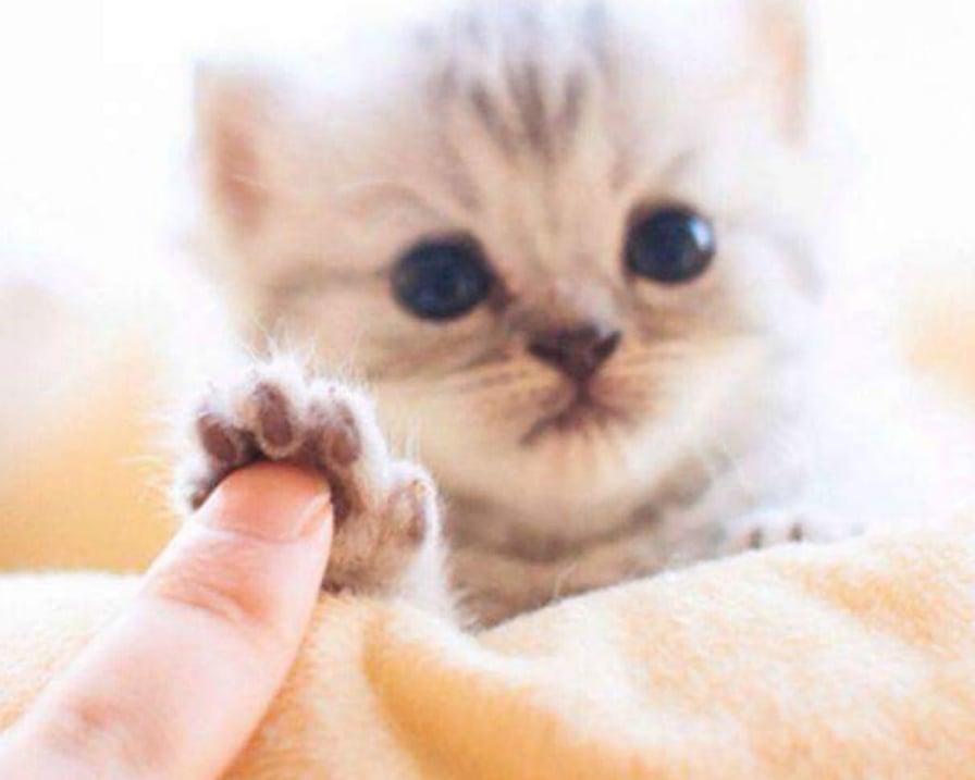 gatto-animale-più-potente