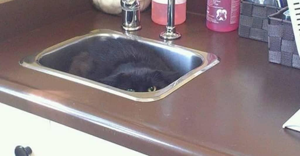 gatto-gioca-a-nascondino