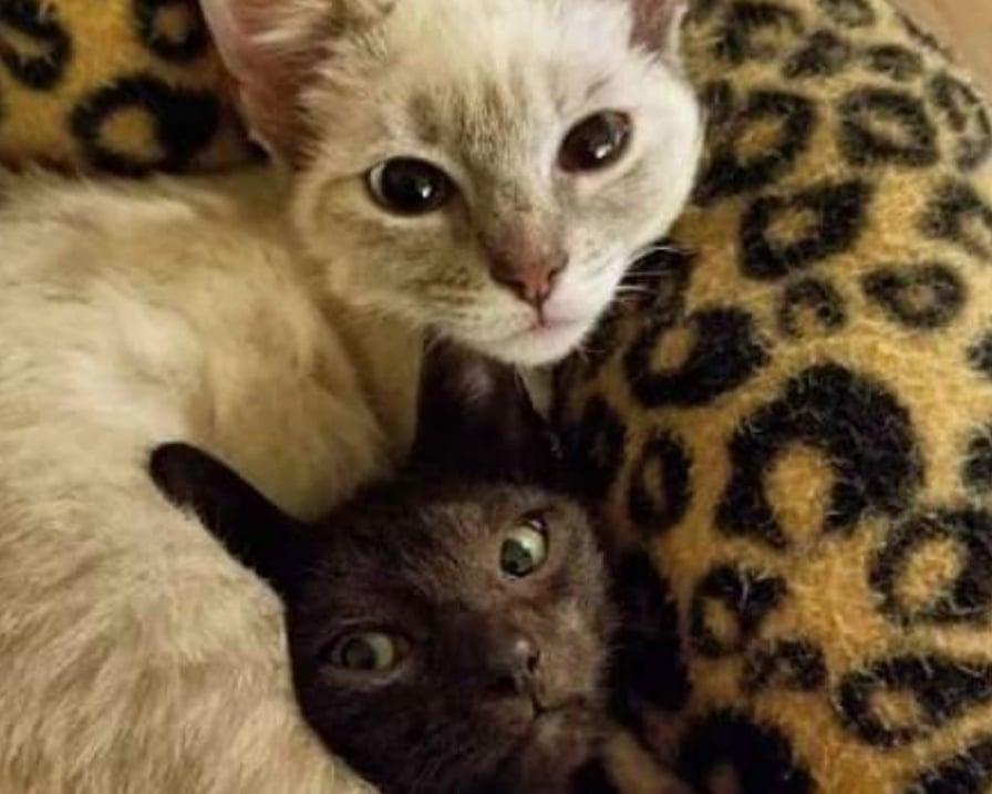 gatti-non-si-lasciano-mai