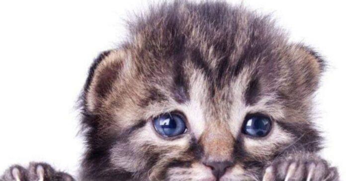 il-gattino-ha-paura