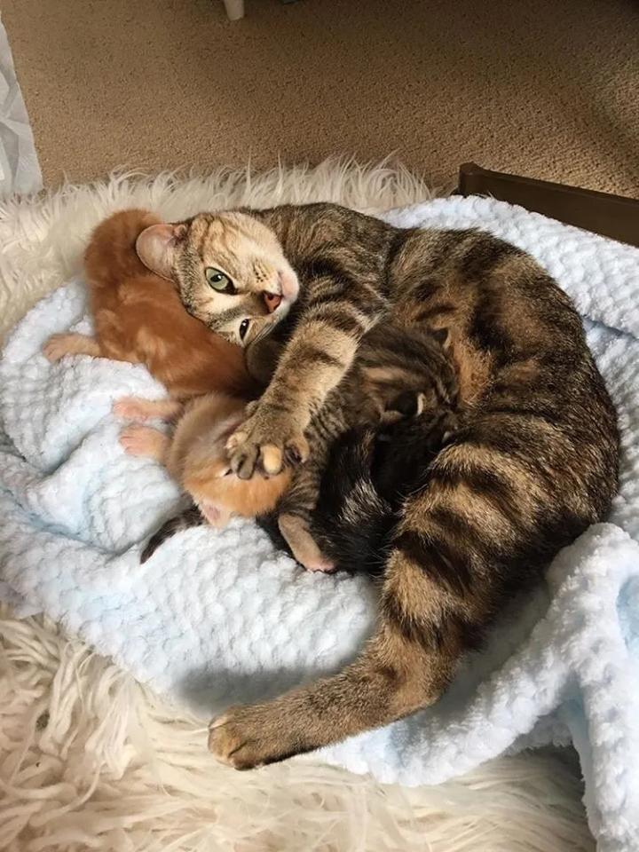 gatta-allatta-cuccioli