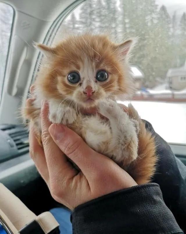 piccolo gattino salvato