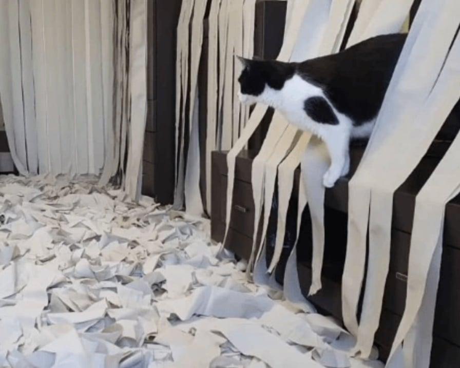 gatto-sala-giochi-carta
