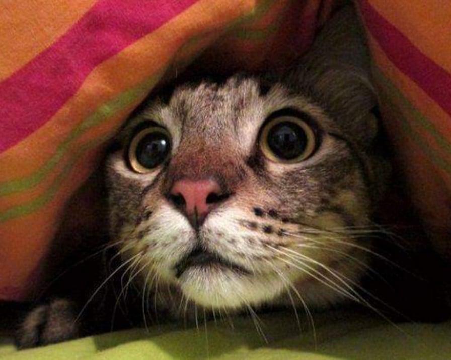 il-gatto-si-nasconde