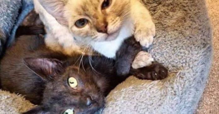 gatti-incrociano-zampe-inseparabili