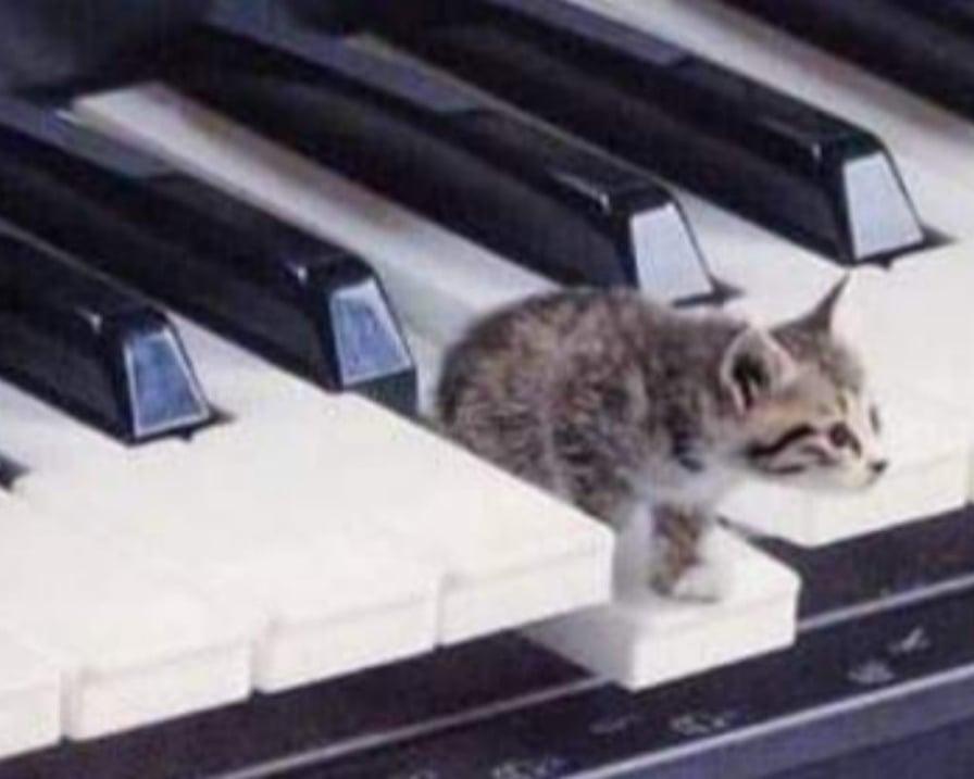 gattino-sul-tasto-del-pianoforte