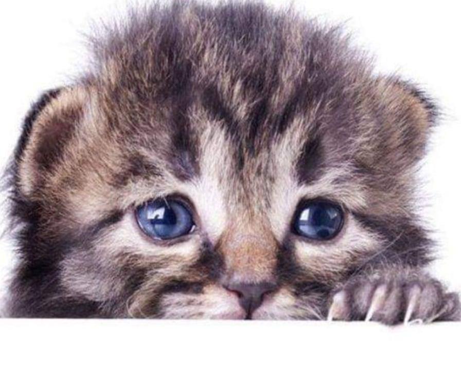 il-gattino-spaventato