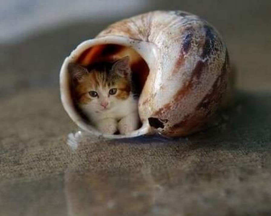gattino-nel-guscio-di-lumaca