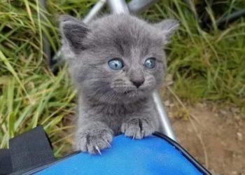 il-gattino-trovato-in-riva-al-lago