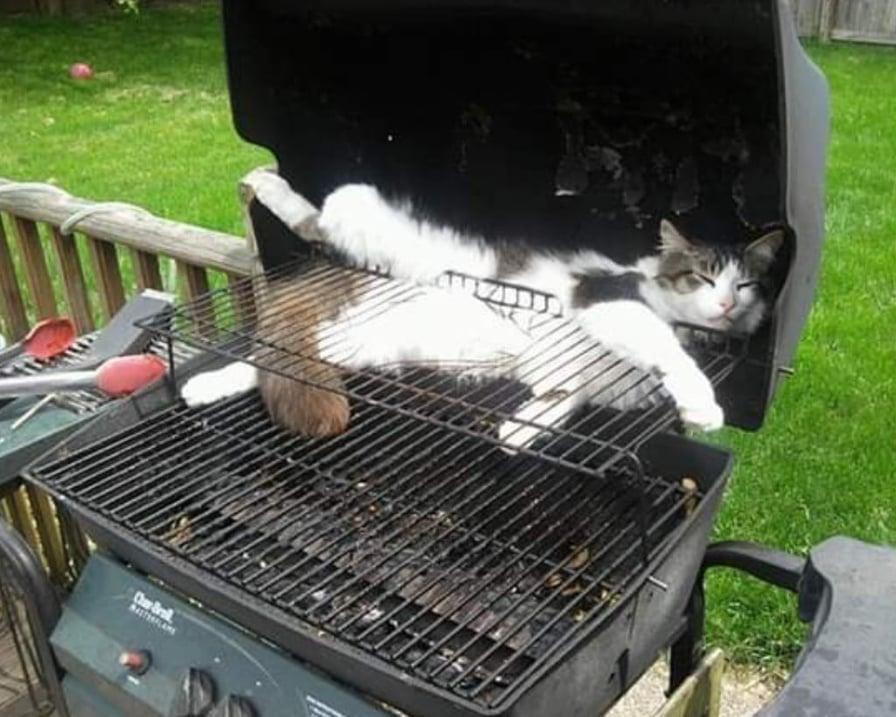 gatto-sul-barbecue