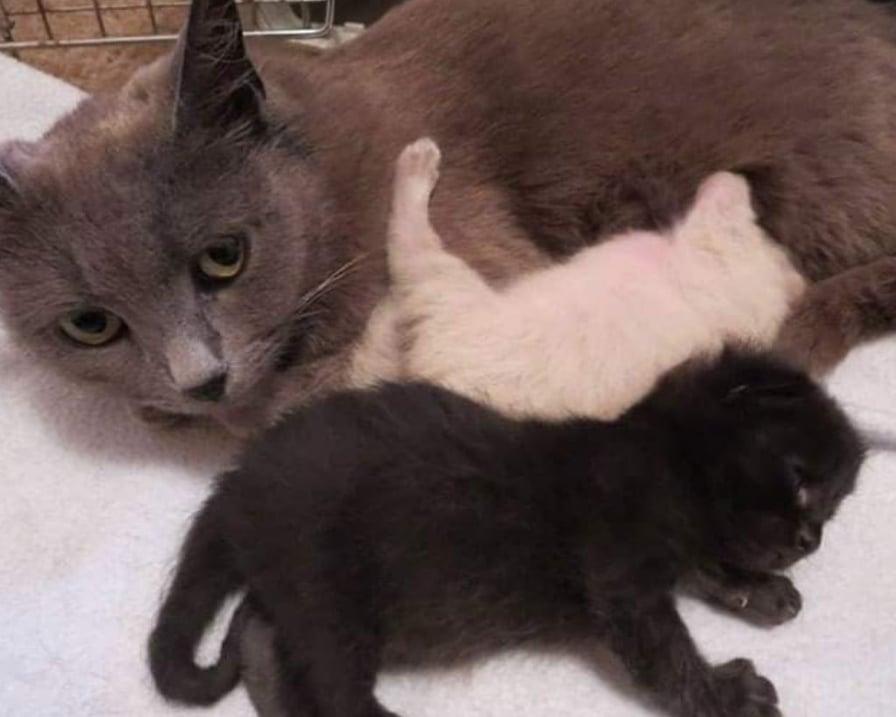 gatta-con-due-gattivi