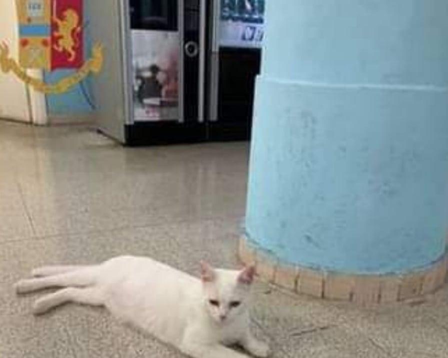 gatto-romeo-smarrito