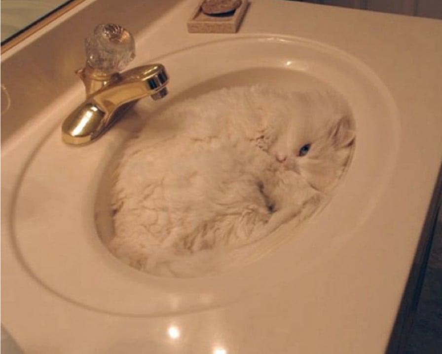 gatto-dorme-lavandino