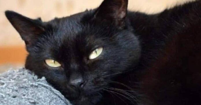 primo-museo-del-gatto-nero
