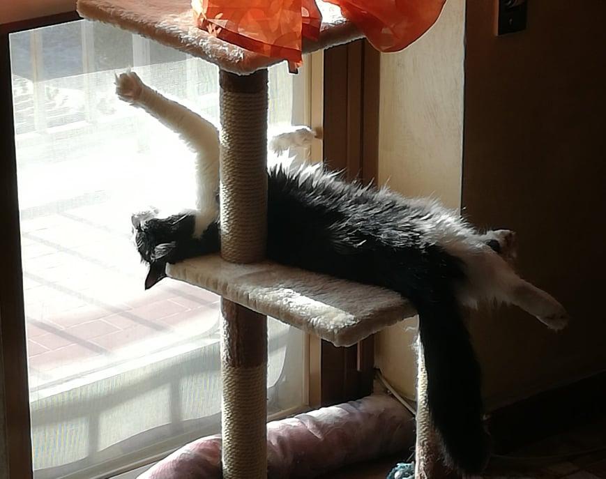 gatto-sdraiato-al-sole