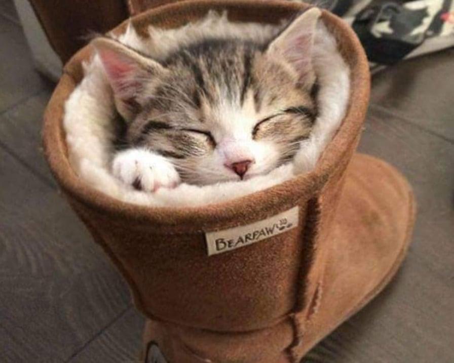 gatto-nello-stivale