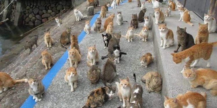 l'isola-dei-gatti-richiede-cibo