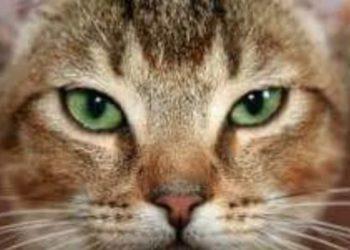 gatto-fissa-vuoto