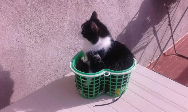 gatto-nel-cestino-delle-mollette