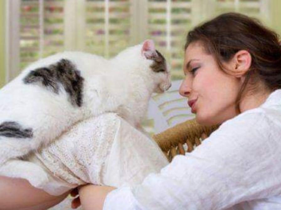 gatto-guarda padrona