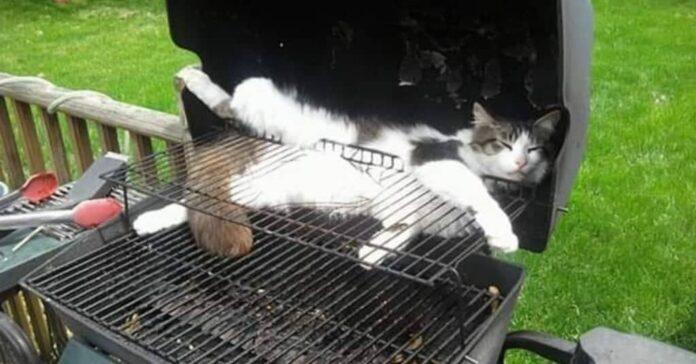 gatto-dorme-posizione-strana