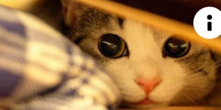 gatto-impaurito-dalle-fiamme