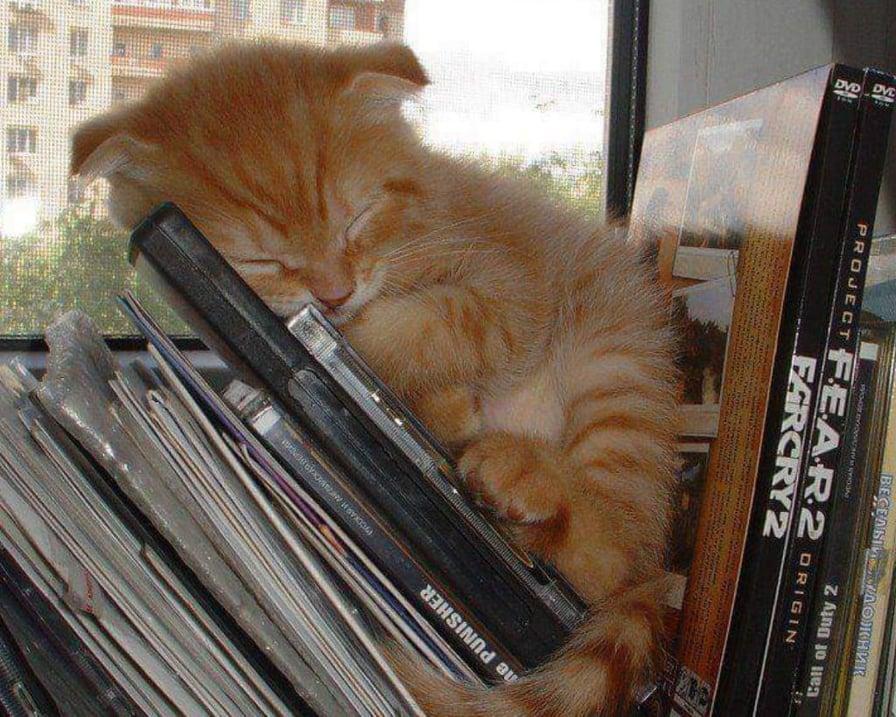 gattino-sui-dvd