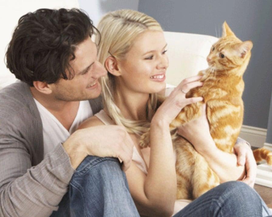 gatti-in-famiglia