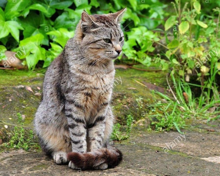 gatto-si-riposa