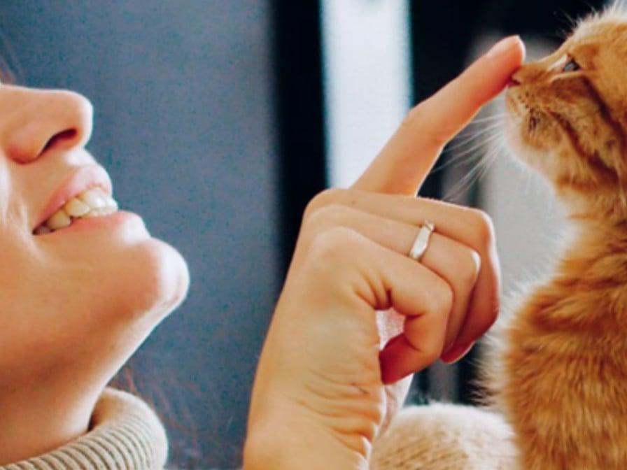 meglio-vivere-con-un-gatto