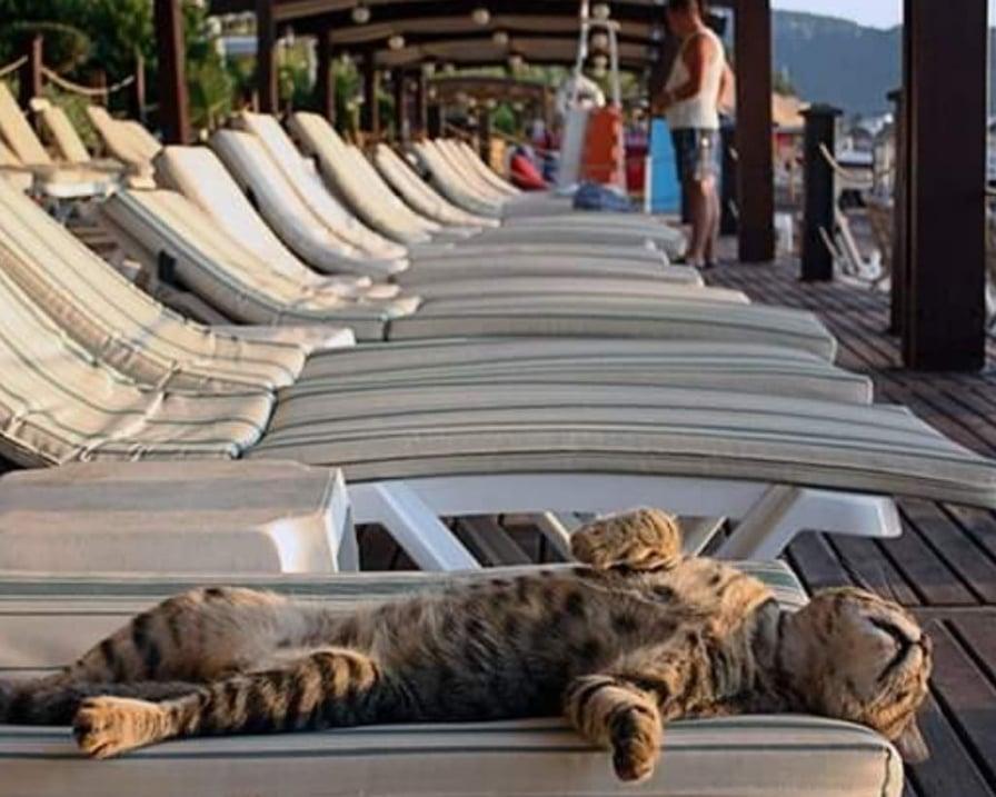 gatto-in-vacanza