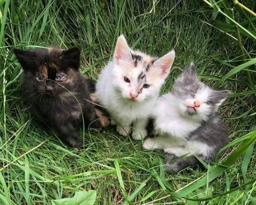 tre-gattini-malati