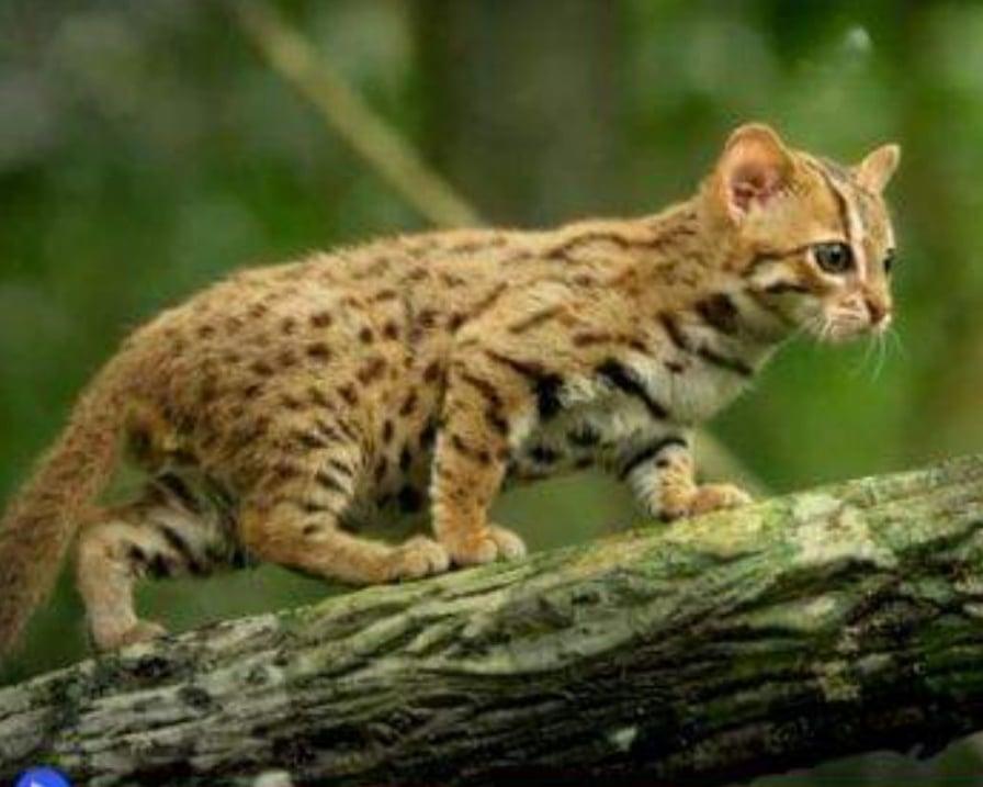 gatto-cammina-sul-tronco