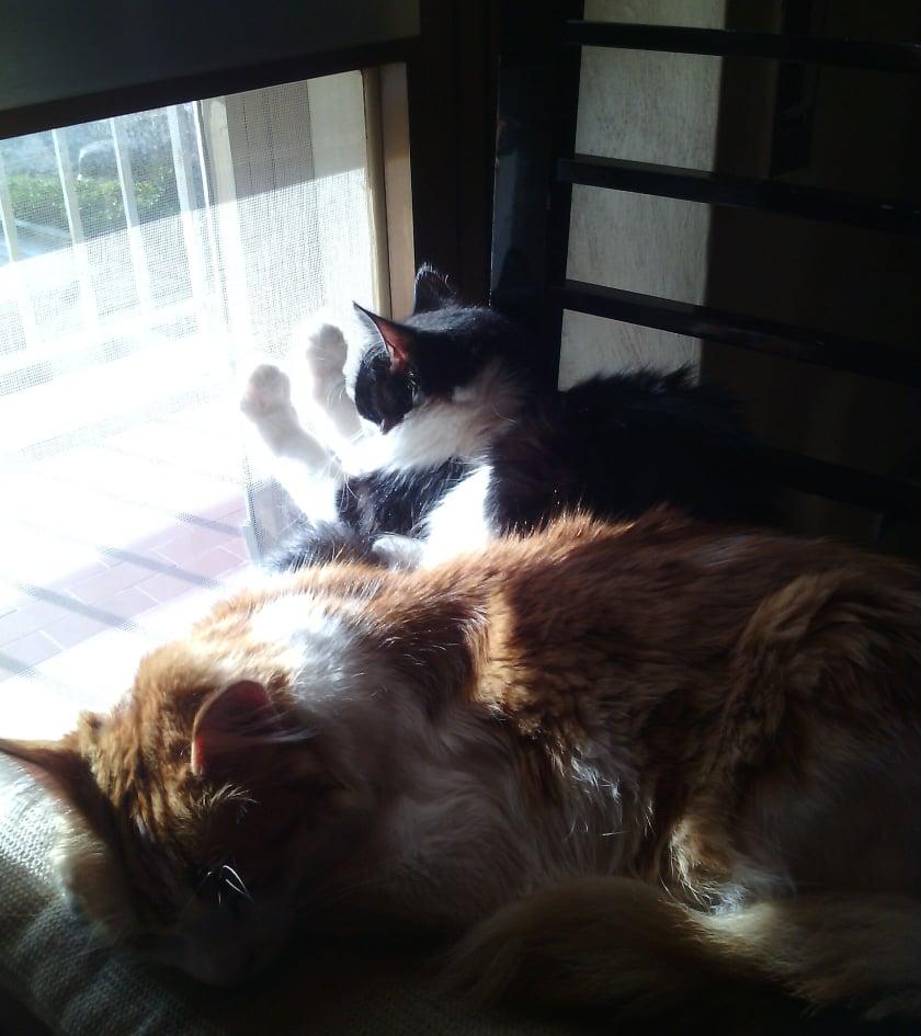 gatti-si-scaldano-al-sole