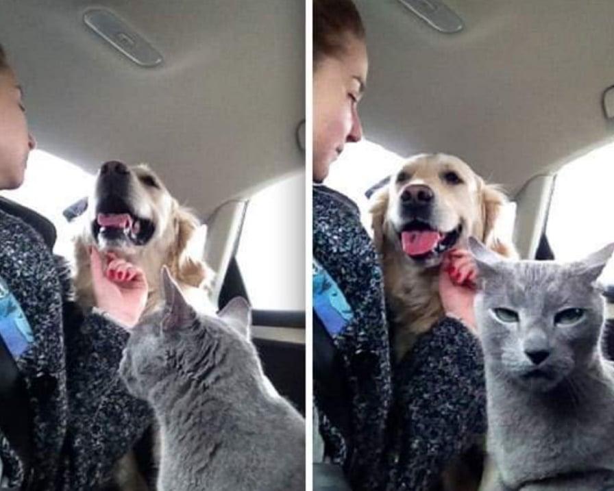 gatto-geloso-del-cane