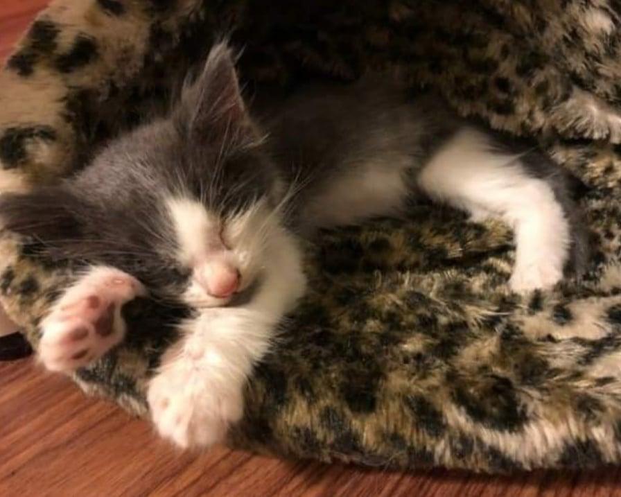 gattino-dorme-sul-tappeto