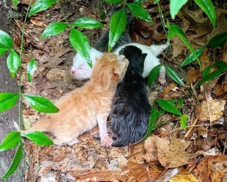 tre gattini bagnati