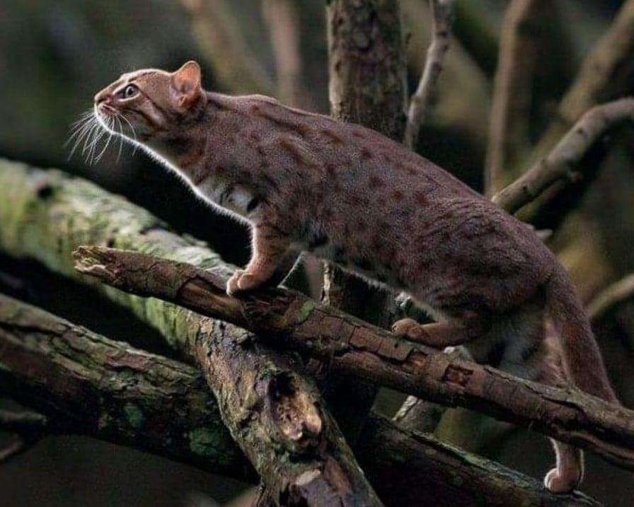 gatto-sugli-alberi