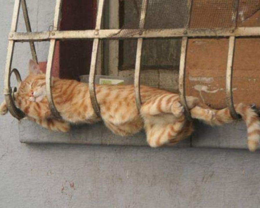 gatto-sull'inferriata