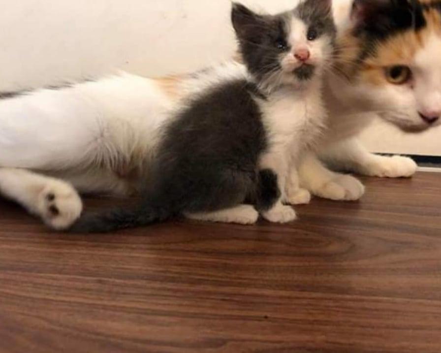 mamma-gatta-e-gattino