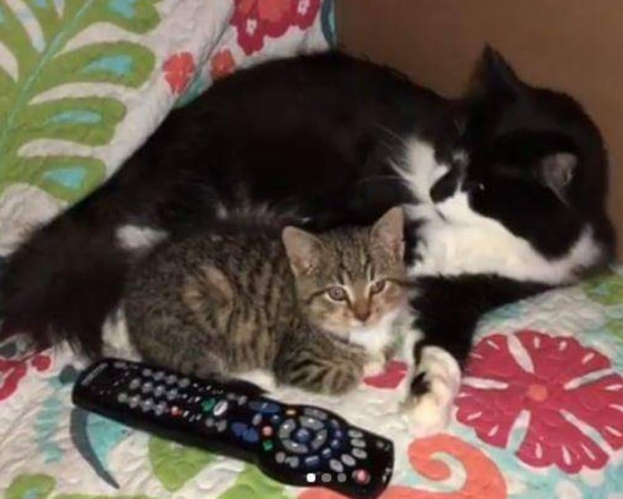 due-gatti-vicini