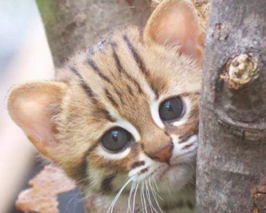 piccolo-gattino