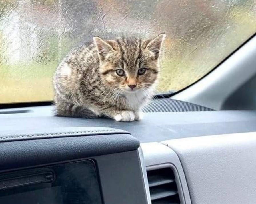 gattino-sul-cruscotto