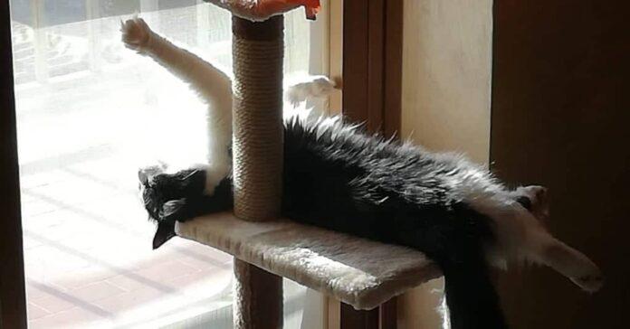 i-gatti-amano-il-sole